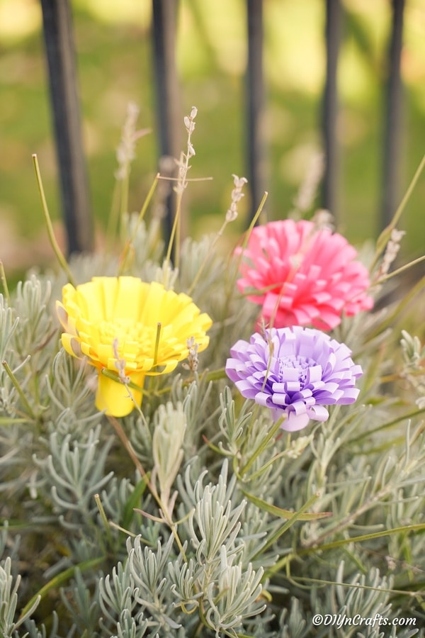 Yellow pink and purple paper flowers on a green shrub