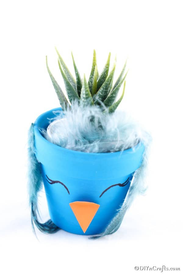 Blue flower pot chicken with aloe plant