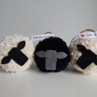 Chunky sheep