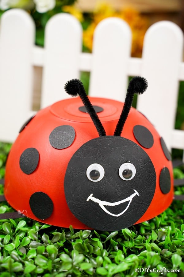 Red bowl ladybug in front of white picket fence