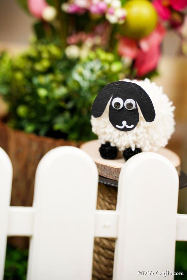 Pom pom sheep behind white picket fence