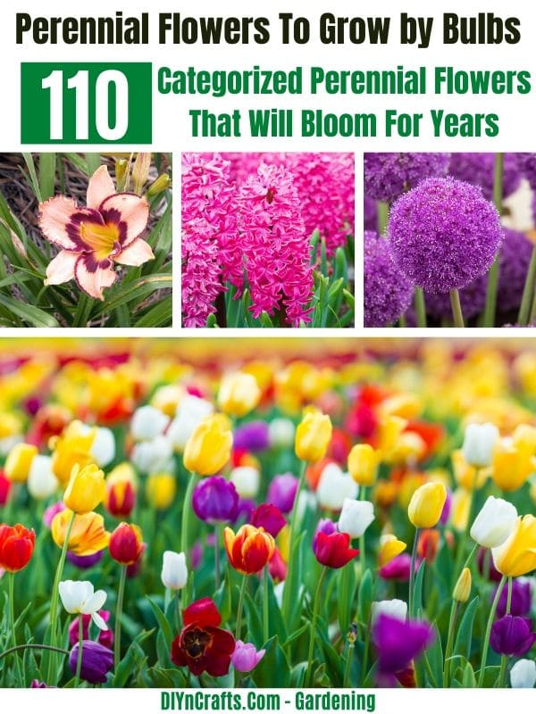 Best Perennials to Grow by Bulbs