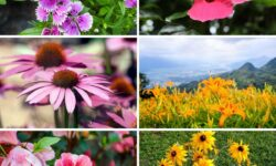 110 Categorized Perennial Flowers That Will Bloom For Years