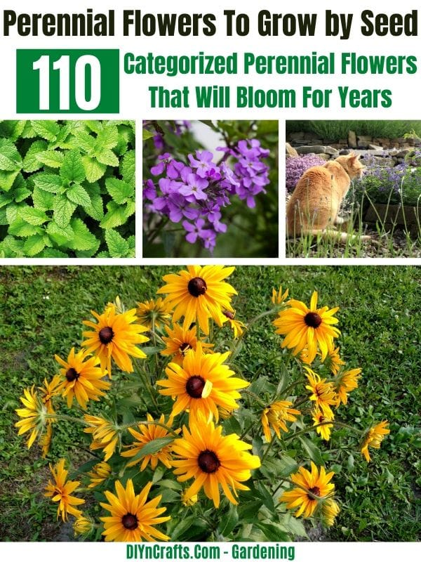 Best Perennials to Grow by Seed or Seedlings
