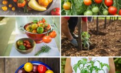 The Only Guide to Growing Tomatoes You'll Ever Need
