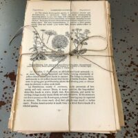 Vintage botanical book pages for junk journal scrapbooking