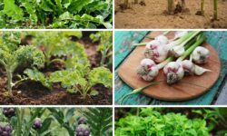 15 Perennial Vegetables and Herbs That'll Feed You For Years