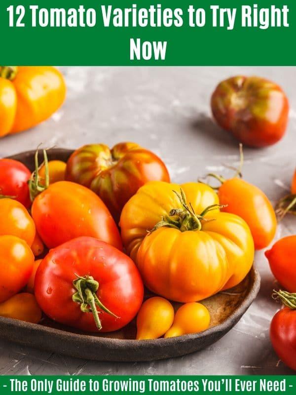 12 variétés de tomates à essayer dès maintenant