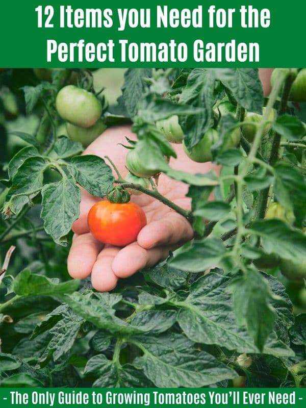 12 Items you Need for the Perfect Tomato Garden: