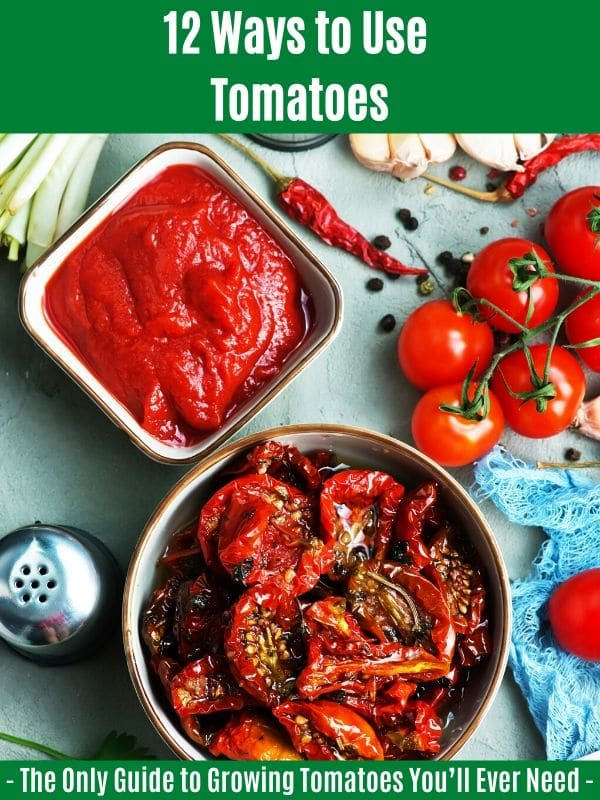 """12 Ways to Use Tomatoes:"""" width=""""600"""" height=""""800"""" srcset=""""https://cdn.diyncrafts.com/wp-content/uploads/2020/04/ways-to-use-tomatoes.jpg 600w, https://cdn.diyncrafts.com/wp-content/uploads/2020/04/ways-to-use-tomatoes-225x300.jpg 225w"""" sizes=""""(max-width: 600px) 100vw, 600px"""