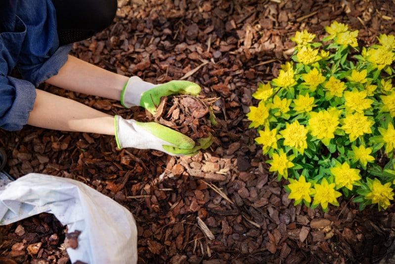 Gardener applying mulch to a flower bed.