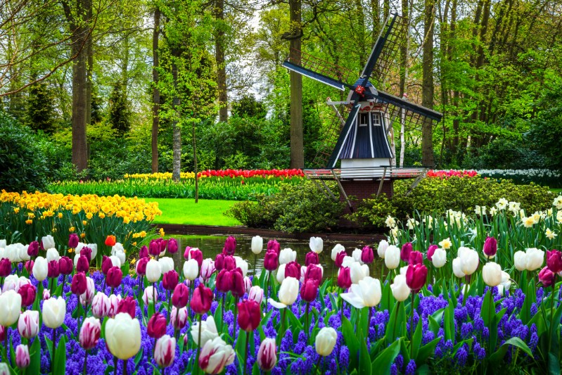 Dutch Windmill at Keukenhof garden