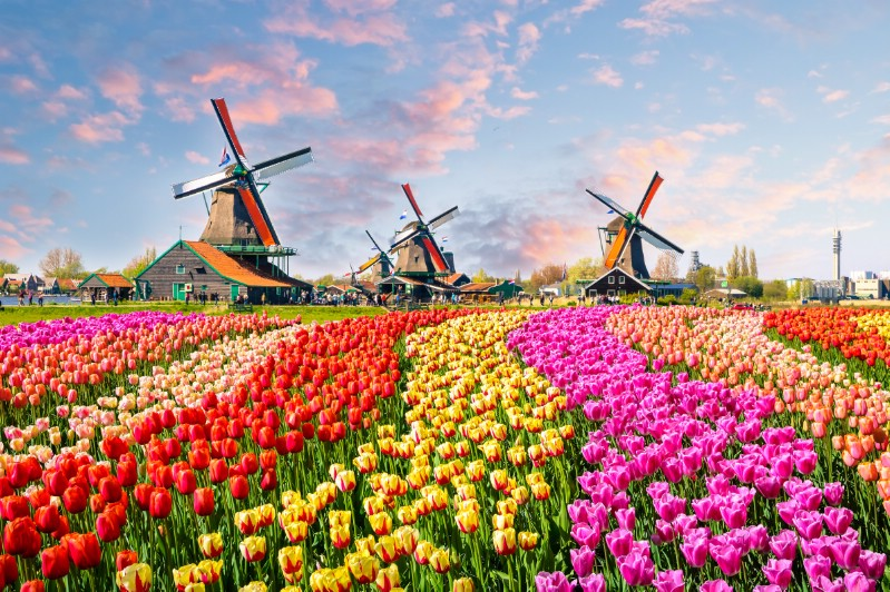 Tulip stream and windmills in the background