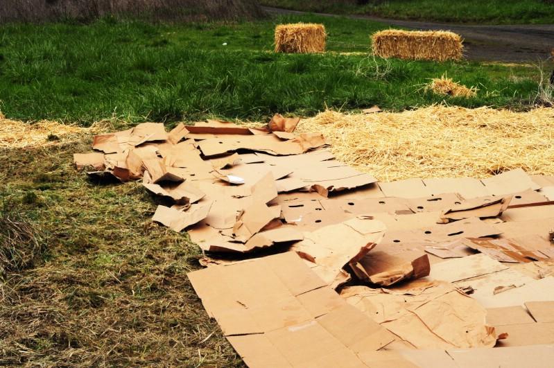 Cardboard mulch.