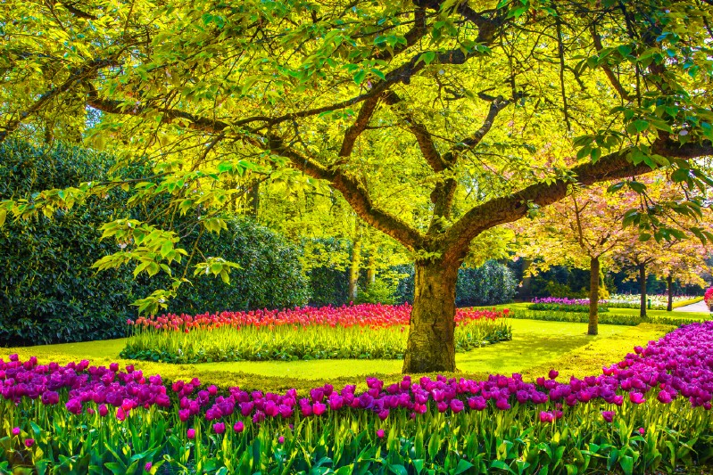 Tree with a tulip garden.