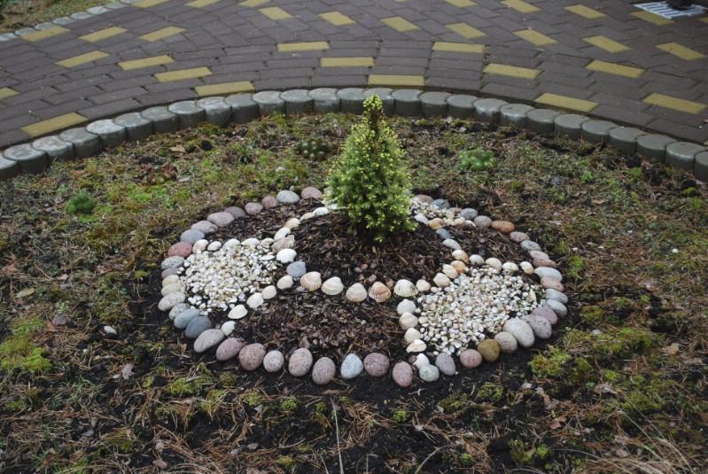 Stone mulch decorating a thuia.