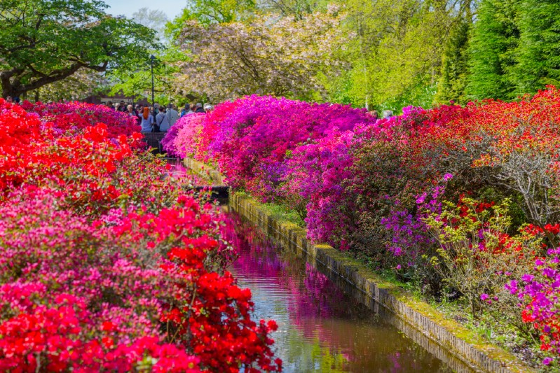 Colorful trees and flowers blooming in a flower park.