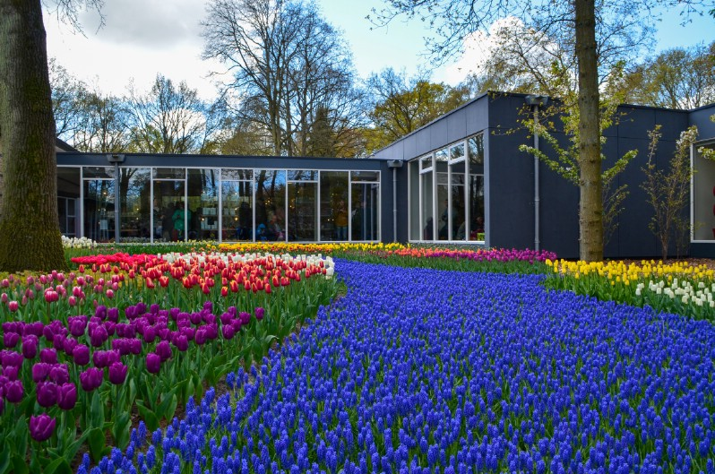 Backyard Planting at Keukenhof