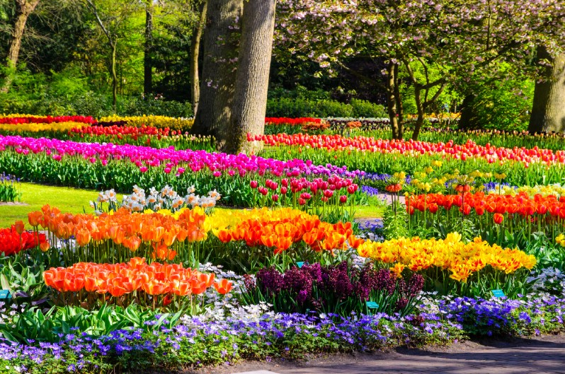 Colorful garden flowers.