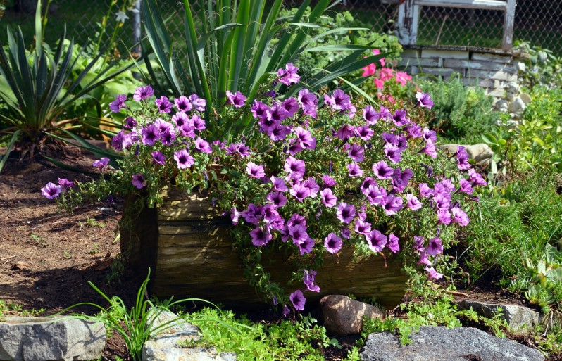 Flowers in Log Planter