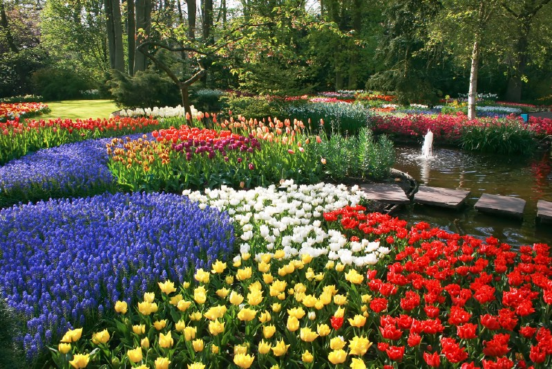 Colorful garden with lots of flowers.