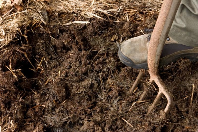 Organic mulch.