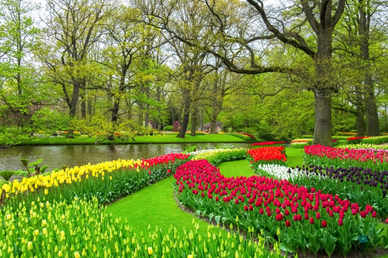 Tulips and other flowers in a Netherlands park