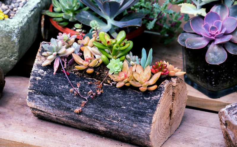 Miniature Rustic Log Planter with Succulents
