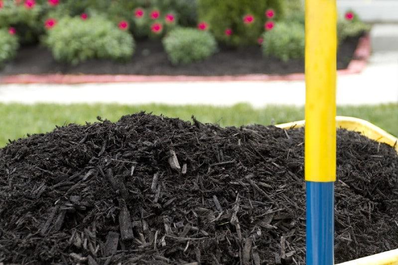 Laying organic mulch.