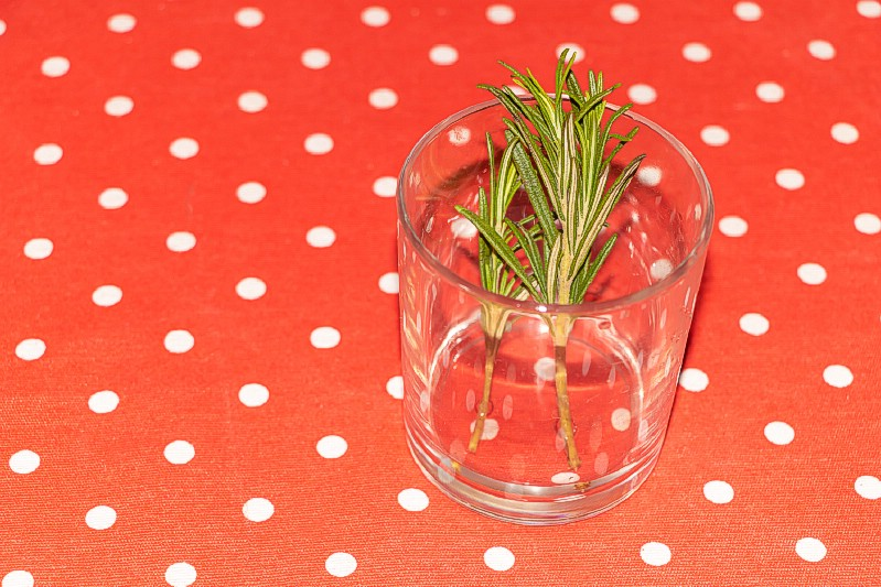 Rosemary grow in water