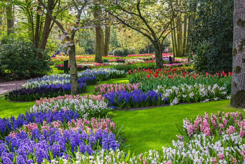 Tulips and Landscaping Trees at Keukenhof