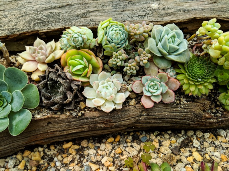 Driftwood Log Planter