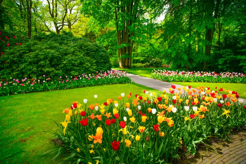 Beautiful tulip flower beds.