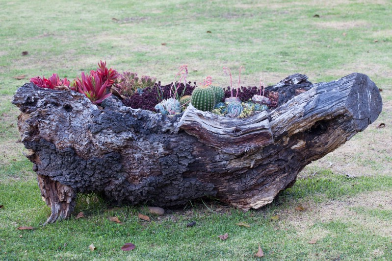 Weathered and Distressed Log Planter