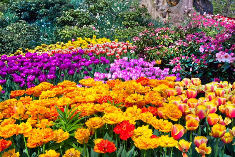 All kinds of colorful flowers.