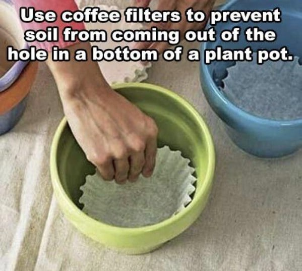 Coffee filters in flower pot
