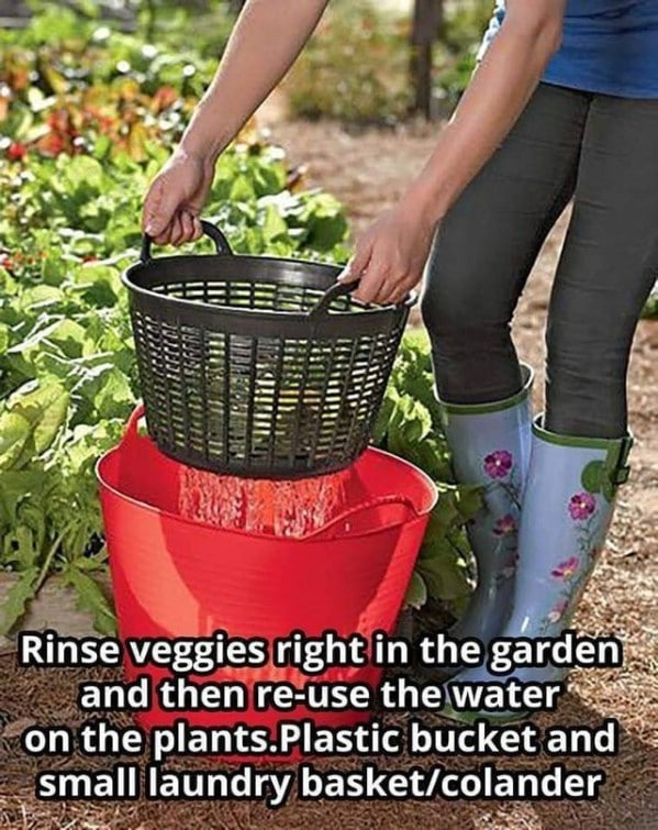 Laundry basket in bucket rinsing vegetables