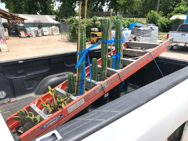 Ladder and plants in truck