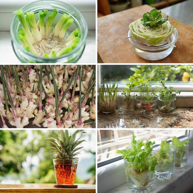 Plants that grow in water collage