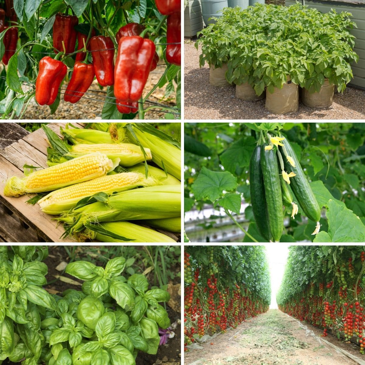 30 Most Profitable Crops for a High-Yielding Garden