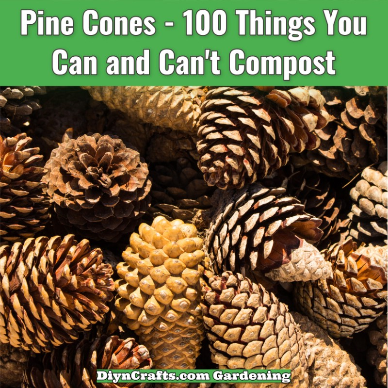 Pine cones and pine needles