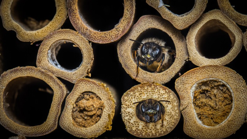 Close up show of bees in bee hotel
