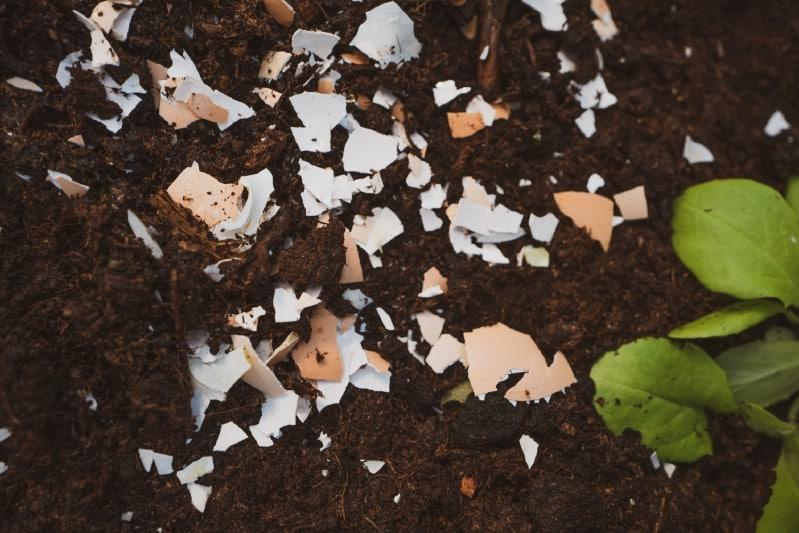DIY fertilizers from eggshells