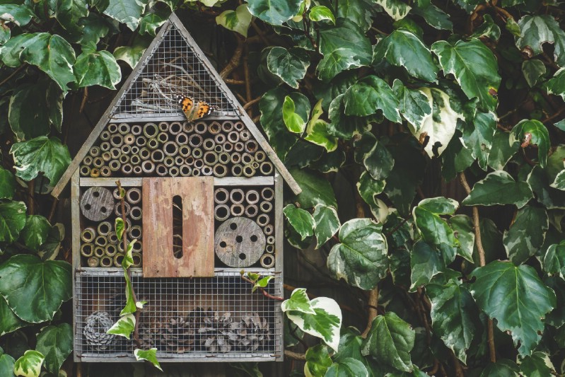 Bee hotel hung on a wall covered with green leaves.
