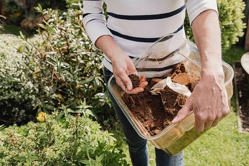 Engrais - Utilisations de jardinage pour le marc de café