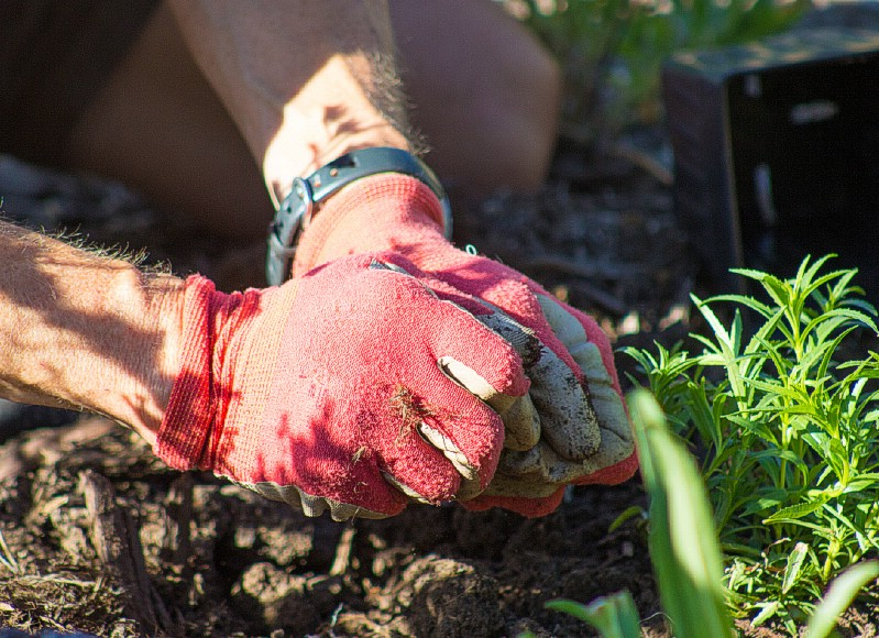 Mulch - Gardening uses for coffee grounds