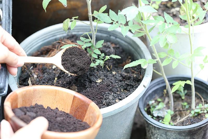 Supprimez les mauvaises herbes - Utilisations de jardinage pour le marc de café
