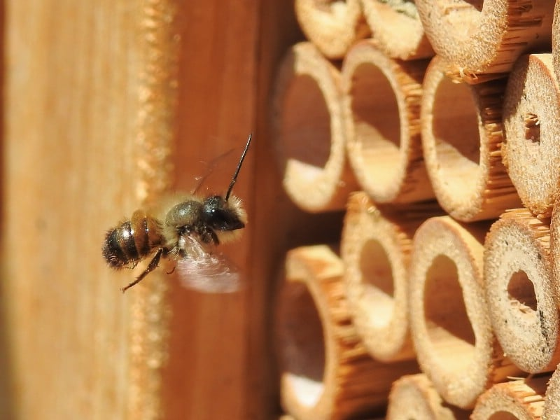 Bee approaching a bee hotel.