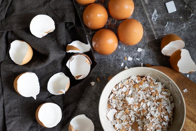Bird Food with eggshells