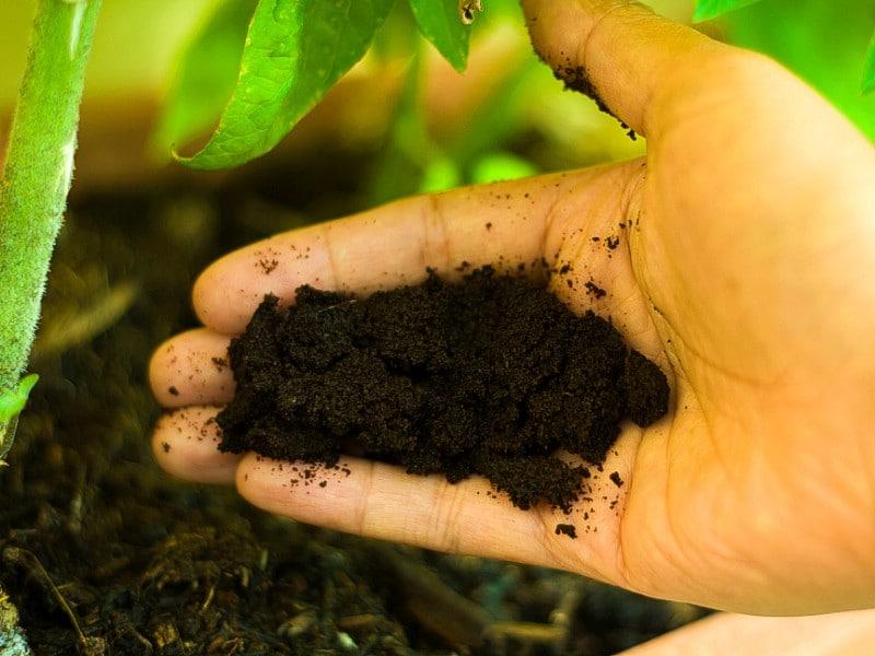 Changer le pH du sol - Utilisations de jardinage pour le marc de café